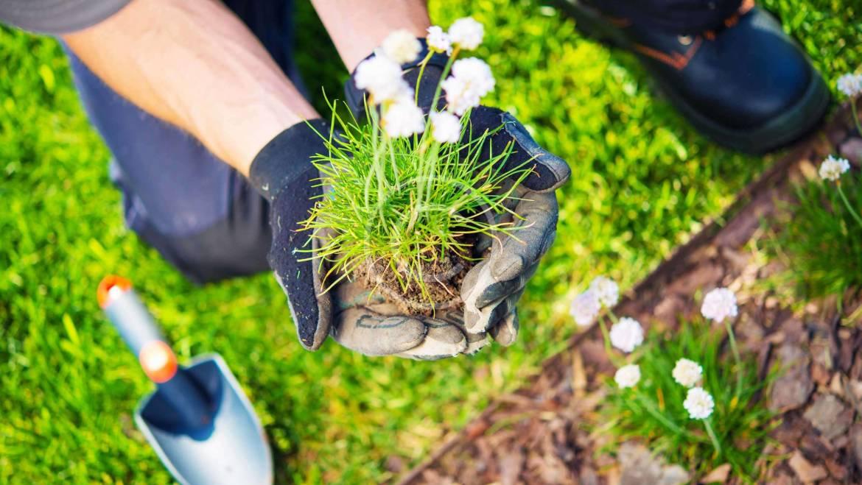 Tips to Keep Pests Away