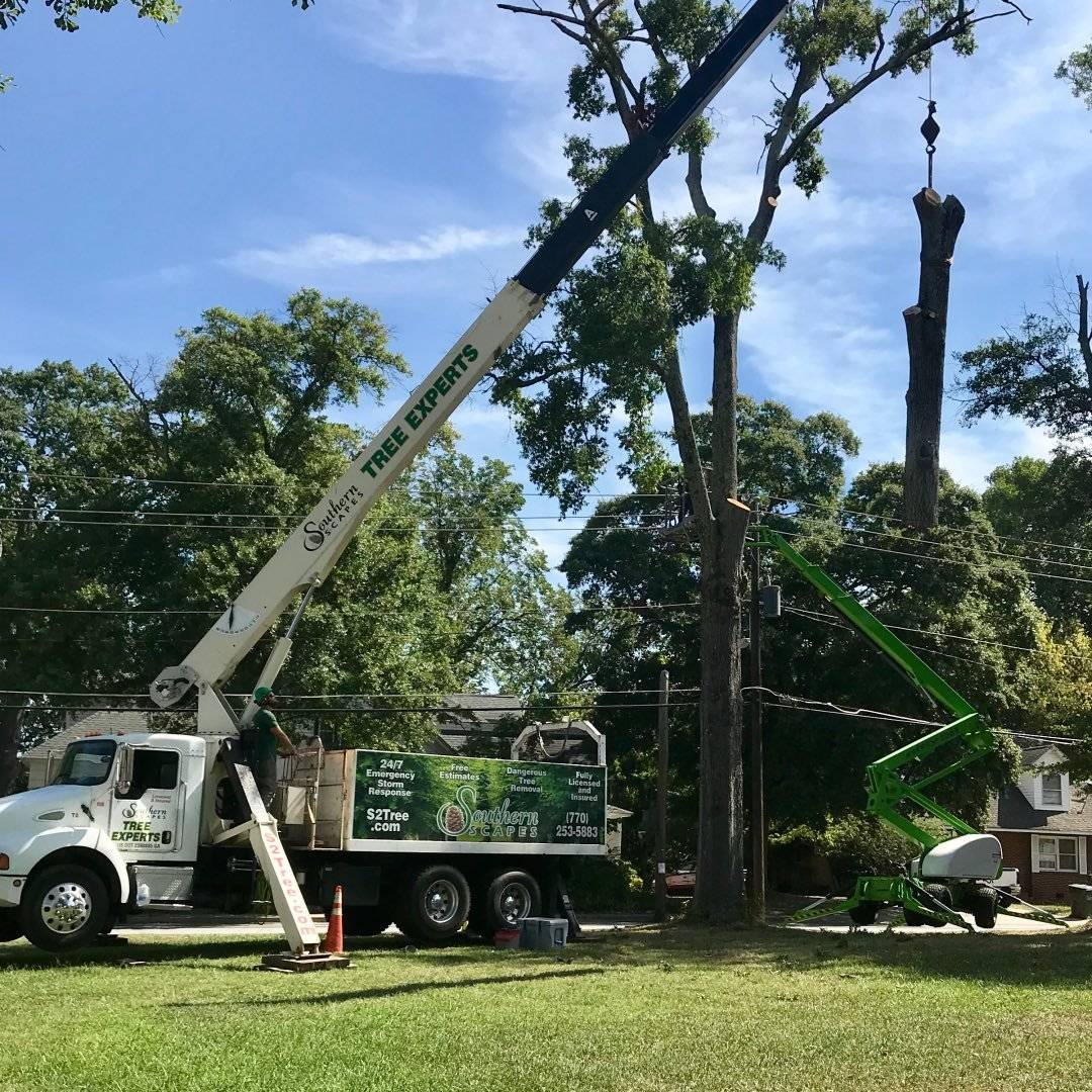 Southern Scapes Tree Experts